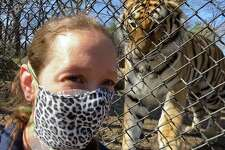 """Sandy Hook resident Bethany Thatcher, an animal care specialist at Bridgeport's Beardsley Zoo, is seen with Reka, a 250-pound Amur tiger. Thatcher was checking out Reka's reaction to her mask -- something she wouldn't normally wear. The mask is part of her gear now, one of many changes because of coronavirus concerns. """"I don't know if she knew who I was right away, but she was staring at my face more than she normally would,"""" Thatcher said, of the 2-year-old tiger."""