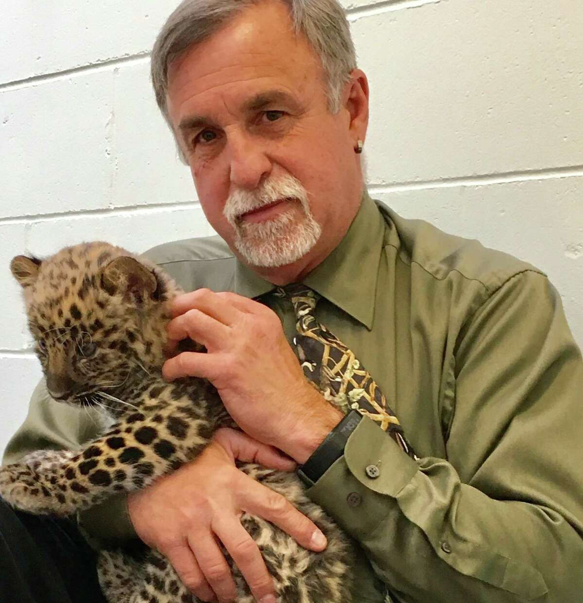 Animal welfare is everyone's first priority at Beardsley Zoo in Bridgeport, says director Gregg Dancho, seen here with Orion.
