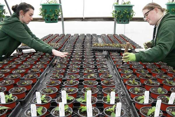Winterberry Gardens employees keep their distance in late March 2020 at a greenhouse in Southington, Conn.