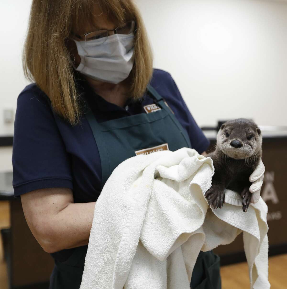 Executive Director Sharon Schmalz at the Houston SPCA's Wildlife Center of Texas, in Houston, Wednesday, April 8, 2020. The Houston SPCA's Wildlife Center remains open and continues to provide lifesaving services during the pandemic and intakes 60-90 orphaned and injured wild animals each day. The higher intake number is mostly attributed to more people staying at home during the Stay Home Work Safe order.