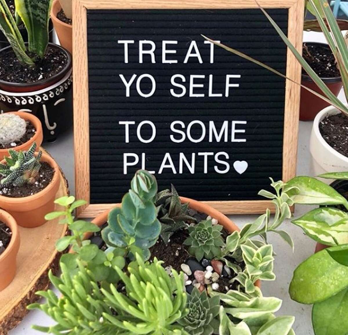 Plant Shoppe, which usually operates as a weekend pop-up business at farmers markets, is offering delivery options every weekend so people can reconnect with the outdoors and get their