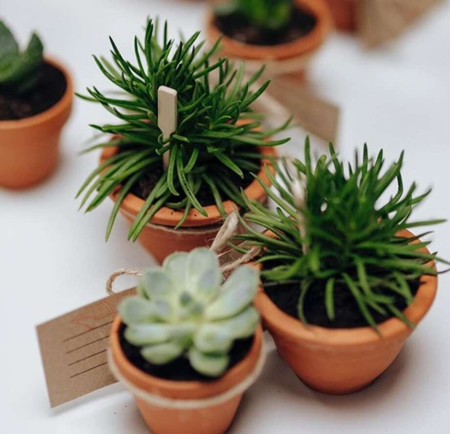 "Plant Shoppe, which usually operates as a weekend pop-up business at farmers markets, is offering delivery options every weekend so people can reconnect with the outdoors and get their ""green fix"" while maintaining social distancing, owner Sonam Aditya said. Photo: Courtesy, Plant Shoppe"