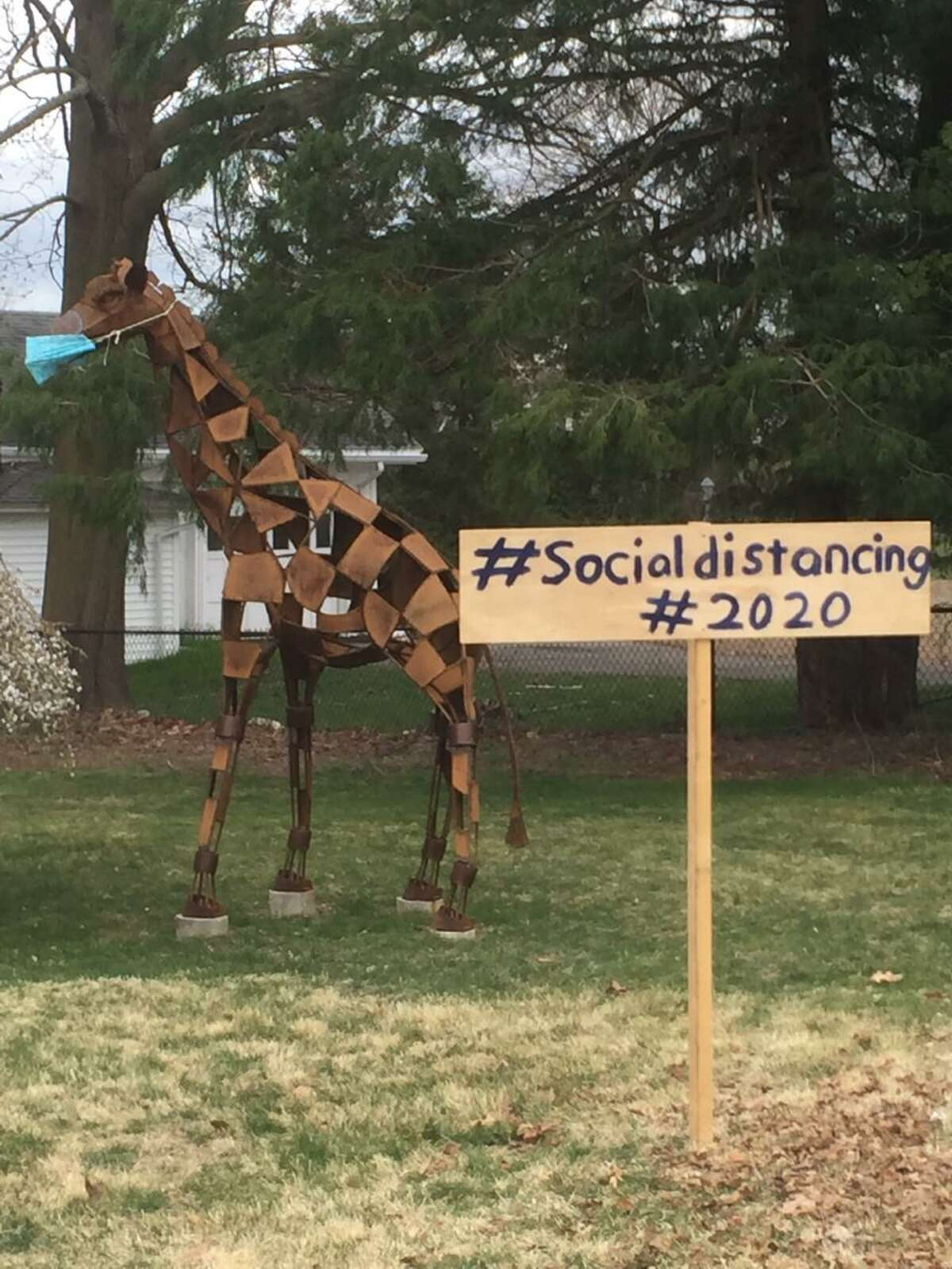 A giraffe wearing a mask was spotted on Main Street with a sign #Social Distancing #2020.