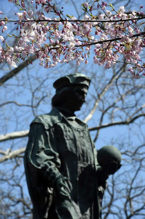 Cherry blossoms bloom near the statue of Christopher Columbus in Wooster Square in New Haven on April 7, 2020. The 47th Annual Cherry Blossom Festival planned for Sunday April 19th has been cancelled. Photo: Arnold Gold / Hearst Connecticut Media / New Haven Register