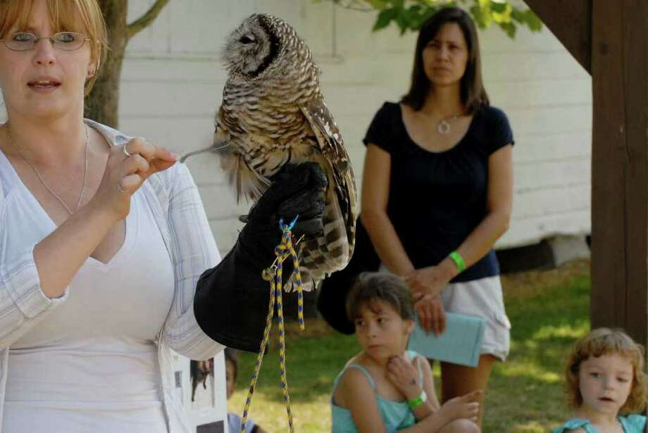Wildlife rehabilitator Sarah McDaniel shows off a barred owl during the Altamont Fair. ( Michael P. Farrell / Times Union Photo: Michael P. Farrell / 00009898A