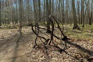 Vines form an intricate pattern, rivaling artwork, at the Stephenson Nature Preserve in Bethel. Social distancing compels us to get outdoors and appreciate nature.