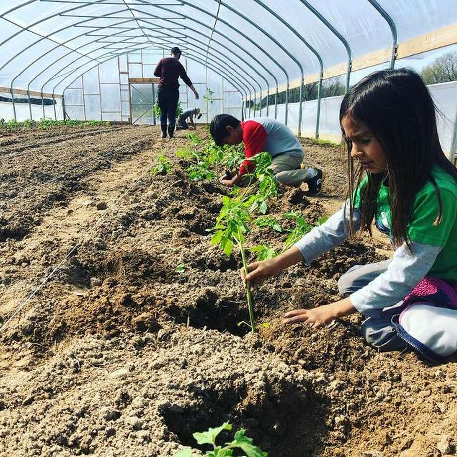 Amy Cloud's two children, Lydia and Diego, help plant tomatoes for Three Rivers Community Farms in Elsah. The farm is preparing for the Tower Grove Farmers Market in St. Louis.