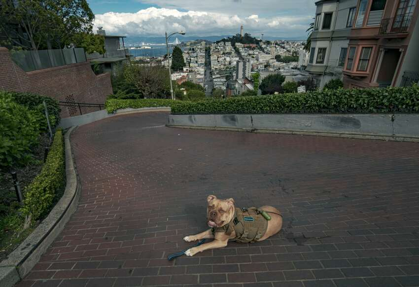 @mooncricketfilms photographed his dog chilling on Lombard Street in San Francisco.