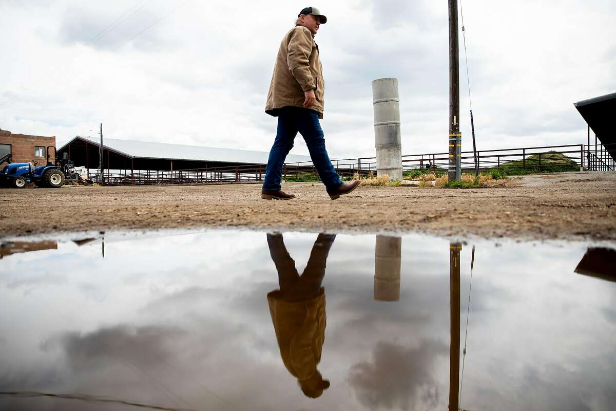 Lima Ranch owner Jack Hamm walks towards his dairy cows as they feed at Lima Ranch in Lodi, Calif. Thursday, April 9, 2020. Big changes have hit the agriculture industry during the Coronavirus outbreak. One of the biggest disruptions is to the dairy industry, with the price of milk in free fall.
