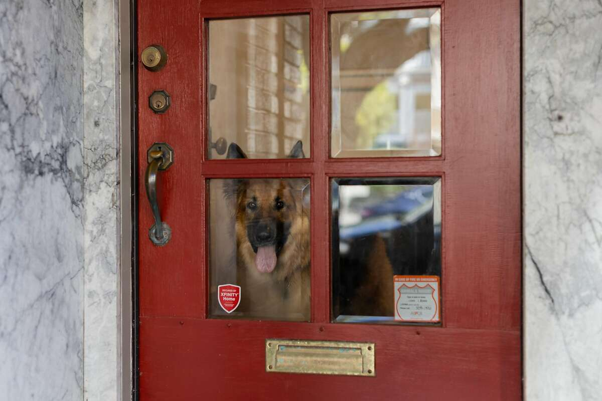 Christina Pappas' dog Lassen looks out of a door with window in his home on Monday, April 13, 2020, in San Francisco, Calif.