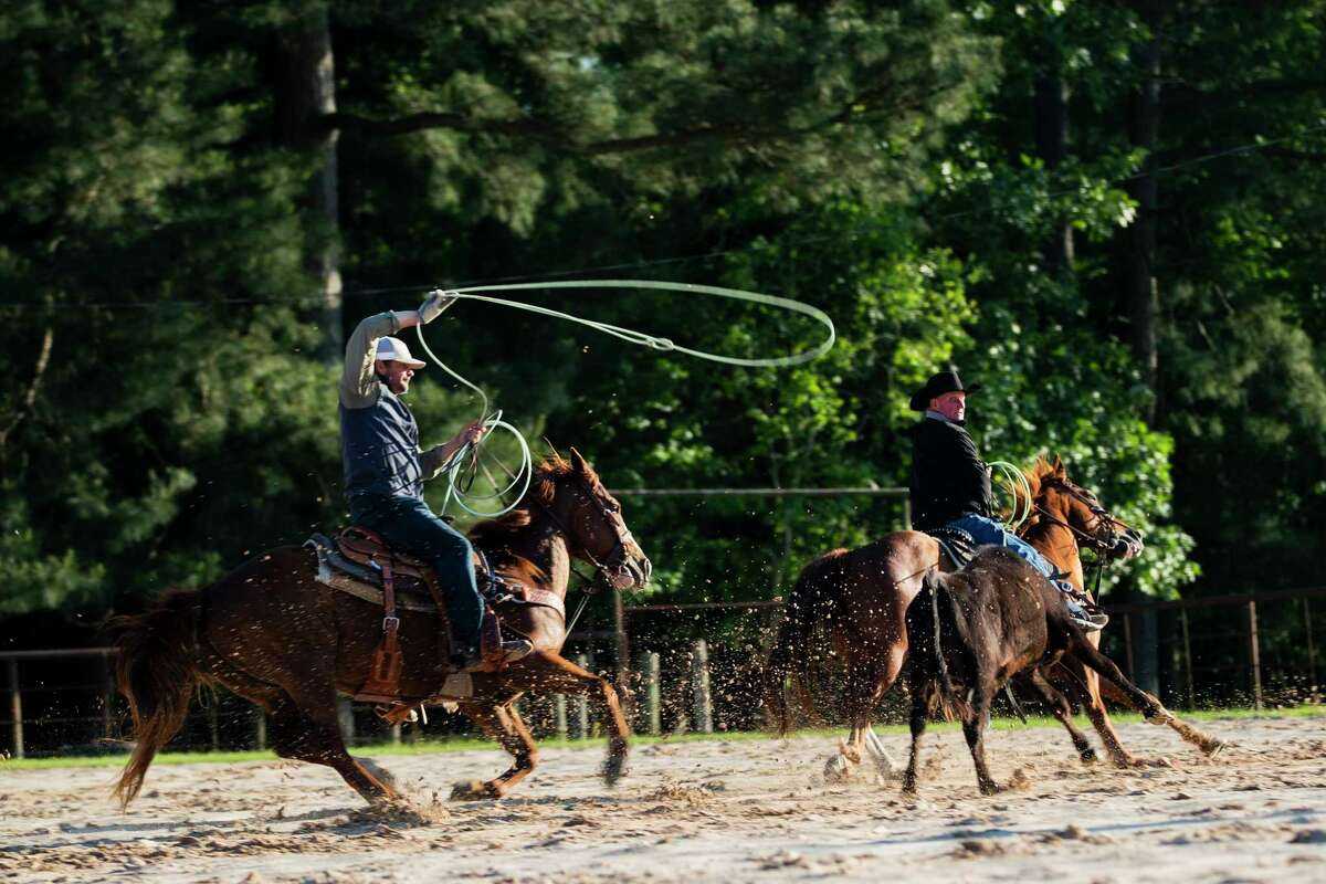 Houston County Judge Jim Lovell and his son Justin Lovell team rope cattle at the family ranch on Monday, April 13, 2020, in Weches. The judge said jokingly that these is how families practice social distancing during the COVID-19 outbreak.