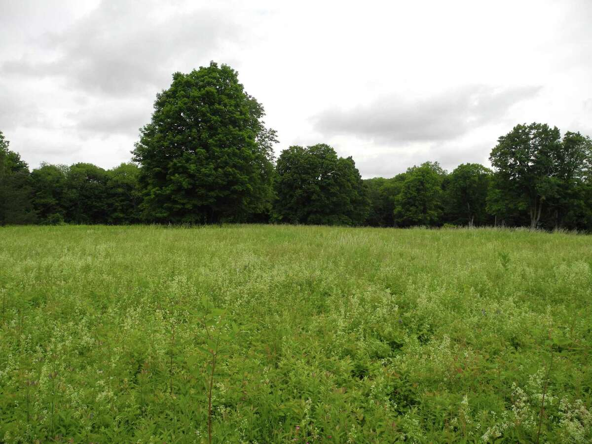 Trees line the meadow at 183 Ridgefield Road.
