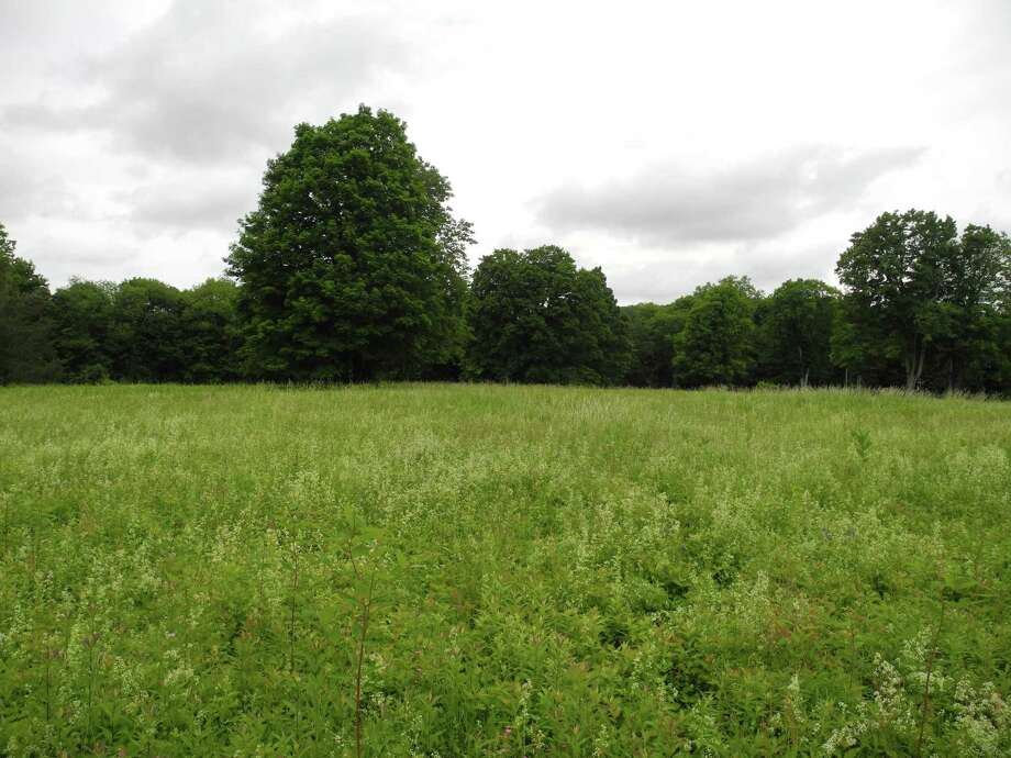 Trees line the meadow at 183 Ridgefield Road. Photo: Jeannette Ross / Hearst Connecticut Media / Wilton Bulletin