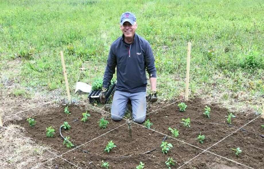 Darien Land Trust Board member Michael Sgroe planting natives at Mather Meadows. Photo: Contributed Photo / / Connecticut Post