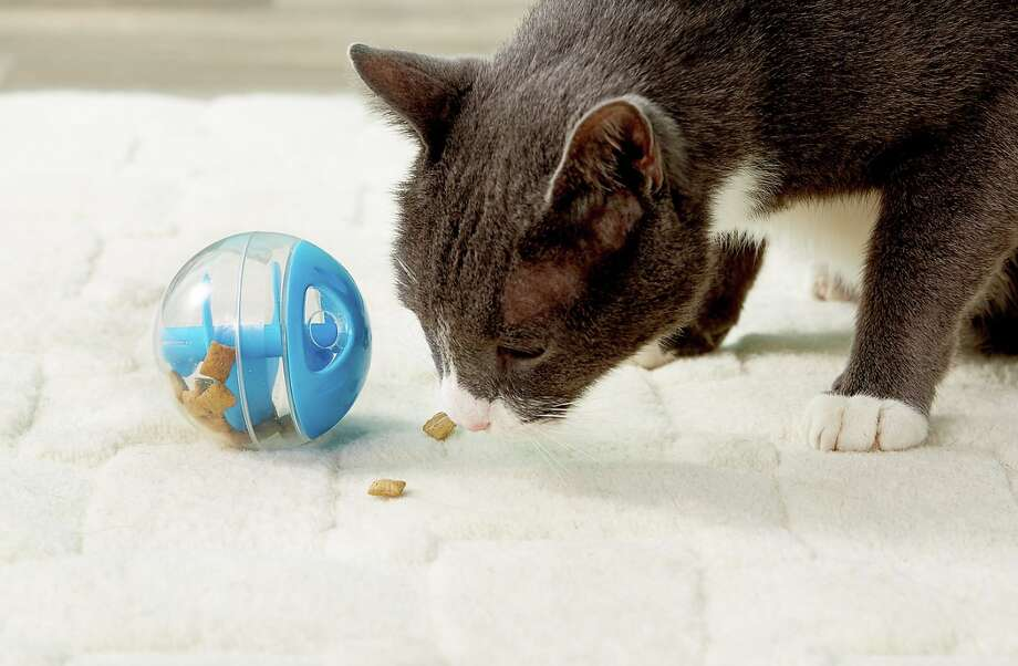 Catit Treat Ball Cat Toy, $4.49 Photo: Chewy