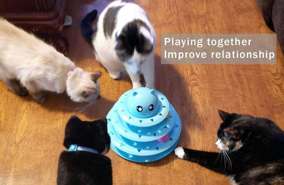Upsky Cat Toy Roller 3 Level Towers, $5.99 Photo: Amazon