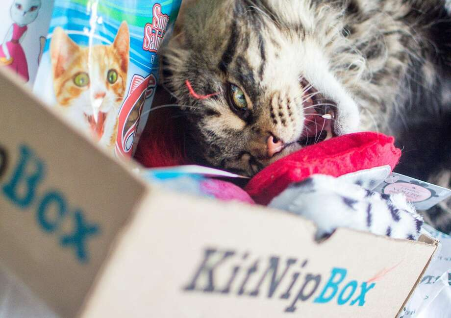 KitNipBox - Monthly Cat Subscription Box of Cat Toys, $16.99 (Monthly) Photo: Amazon