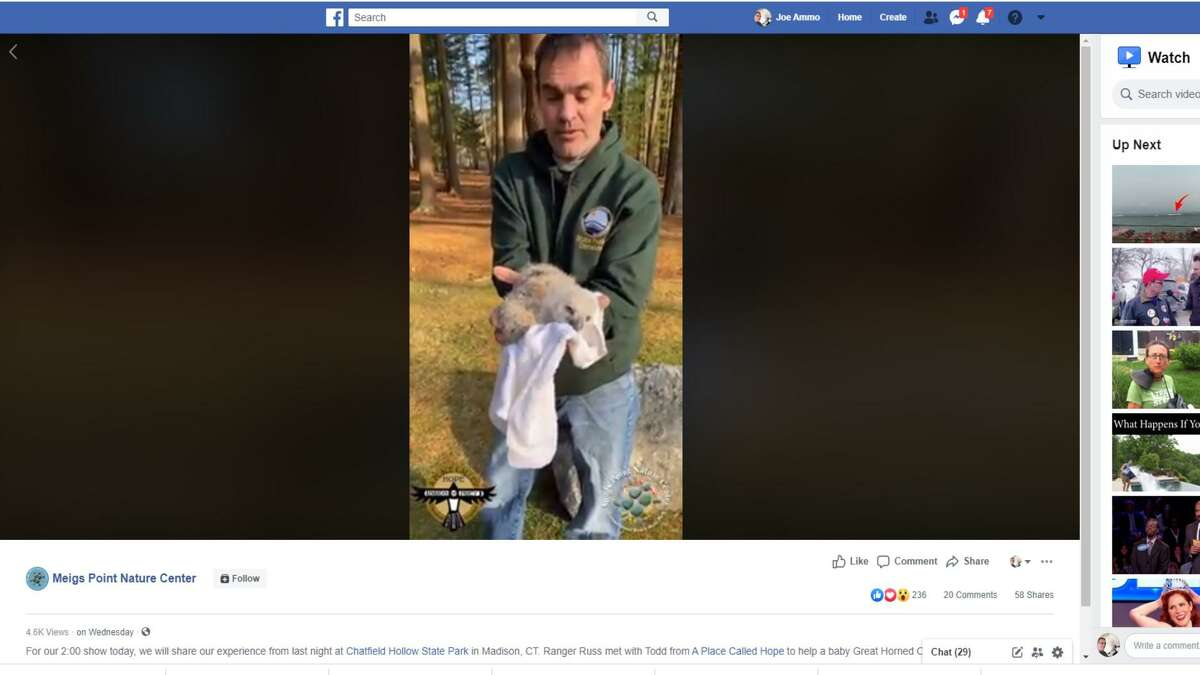 A screen shot of Ranger Russ Miller doing an online segment after being called to Chatfield Hollow State Park to rescue a baby owl that had fallen from a tree.