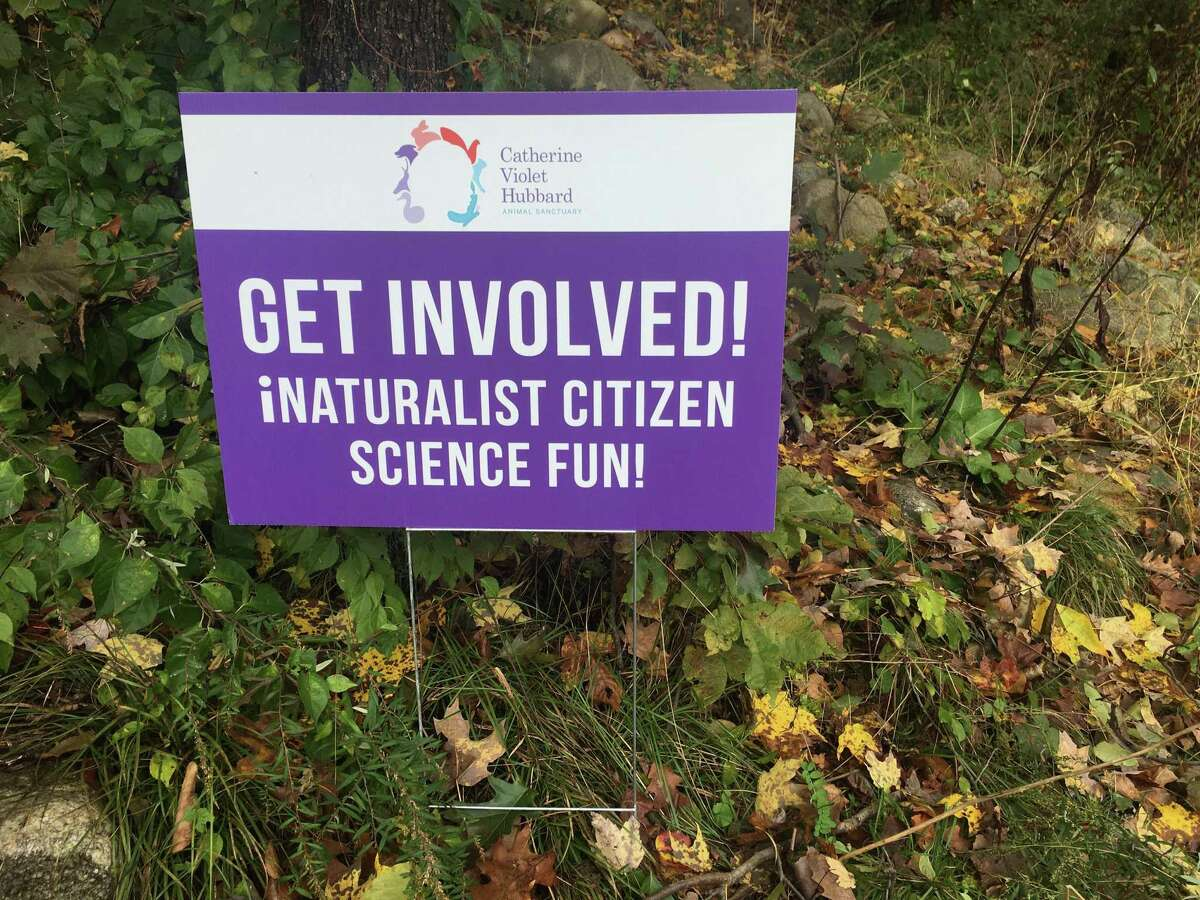 The Catherine Violet Hubbard Animal Sanctuary in Newtown encourages everyone to explore and appreciate nature. One way is by participating in the global City Nature Challenge, April 24 - 27.