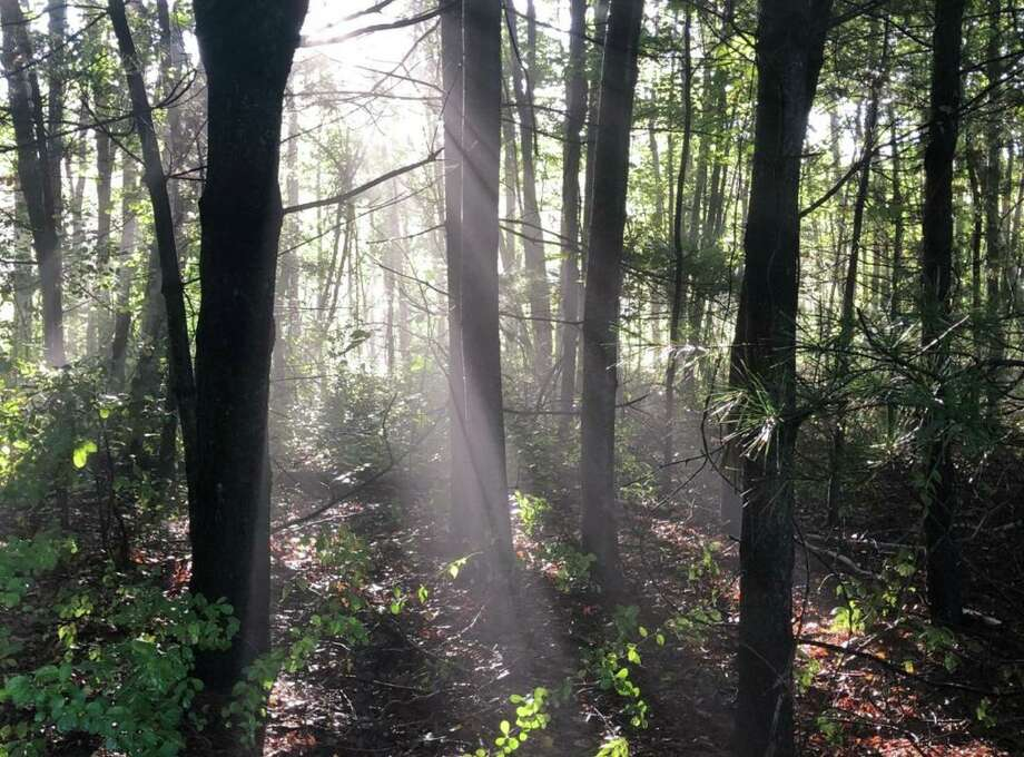 From walking in a forest to being near just one specimen, trees offer many benefits to our physical and mental well-being. Photo: Sam Nunes / Woodcock Nature Center / Wilton Bulletin