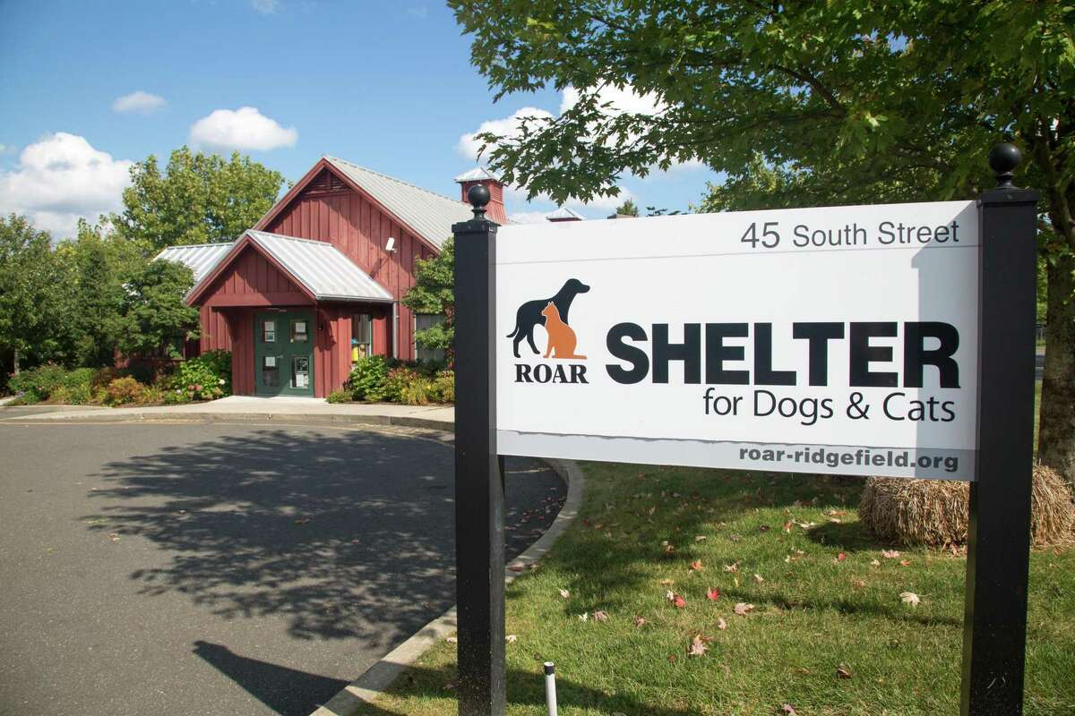 Pet adoptions are on hold at ROAR. The shelter is hoping to resume the adoption process for dogs and cats in the next few weeks.