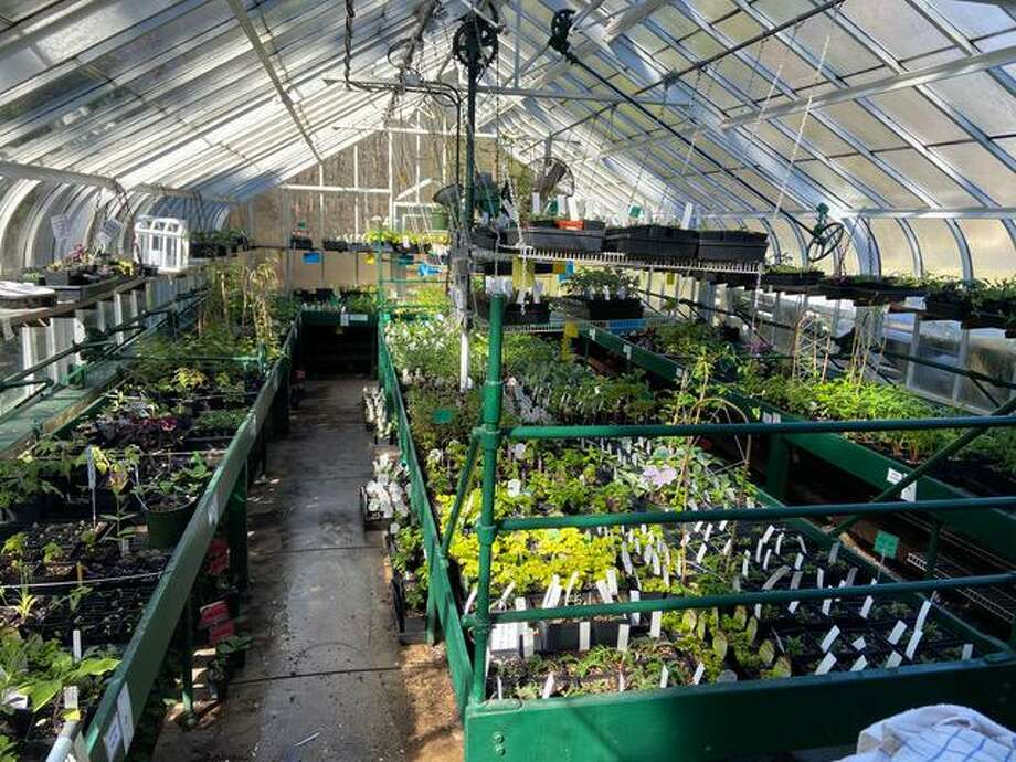 Plants for The DCA Plant Sale are nurtured by DCA Greenhouse Group members. Photo: DCA /