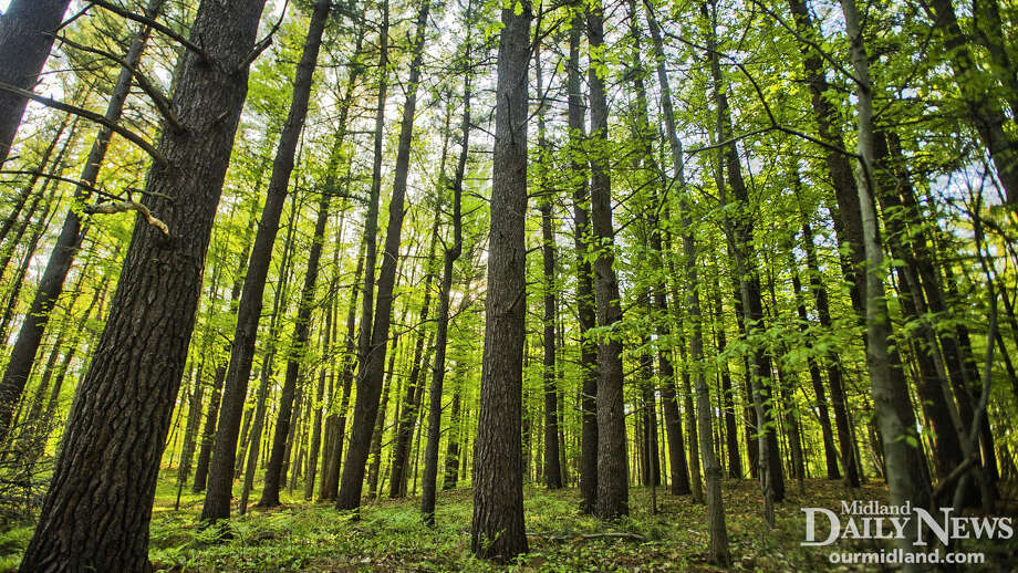 Trees at Whiting Forest. Photo: (Daily News File)