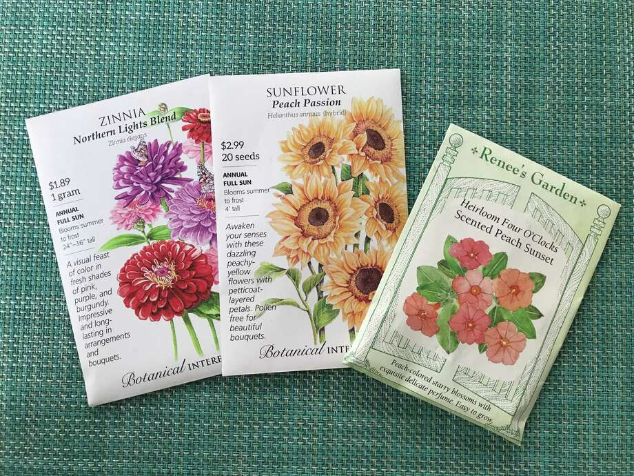 Seeds to plant in the Houston area now for blooms this summer include zinnia, sunflowers and four o'clocks. Photo: Molly Glentzer / Molly Glentzer