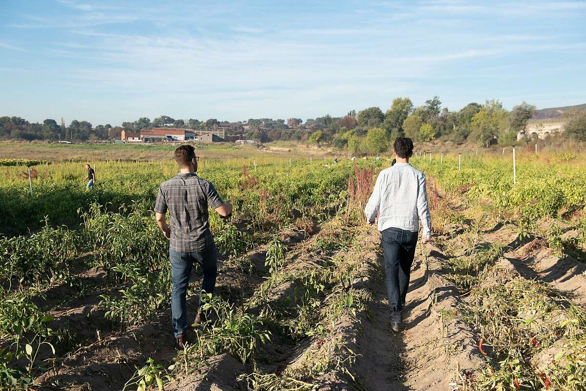 Burlap & Barrel founders Ethan Frisch (left) and Ori Zohar walk through a harvested paprika field in Spain.