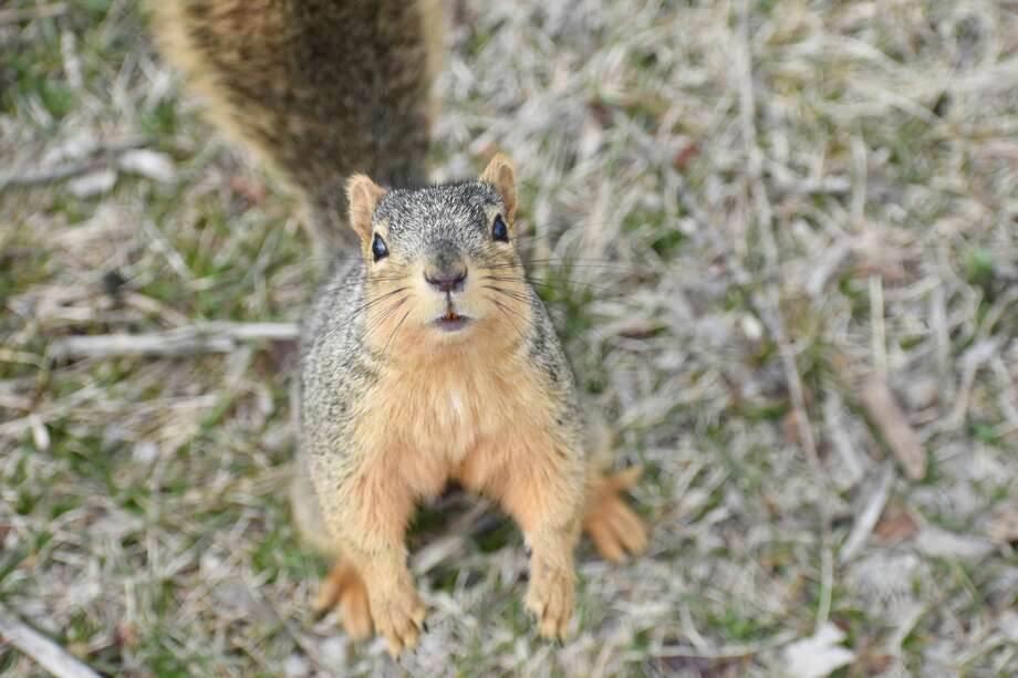 While Big Rapids residents stay isolated in their homes, creatures and critters around town have been out and about enjoying the first days of spring. Although the season got off to a chilly start, warmer days are around the corner. Photo: Courtesy Photo/Vanessa Marcello