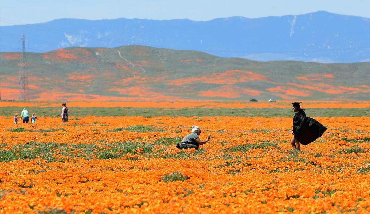 A girl poses in the cap and gown of her graduation outfit in poppy fields near the Antelope Valley California Poppy Reserve on April 16, 2020 in Lancaster, California where the annual spring bloom is underway. - This year's bloom is being live-streamed as park grounds remain closed since late March due to the coronavirus pandemic. (Photo by Frederic J. BROWN / AFP) (Photo by FREDERIC J. BROWN/AFP via Getty Images)