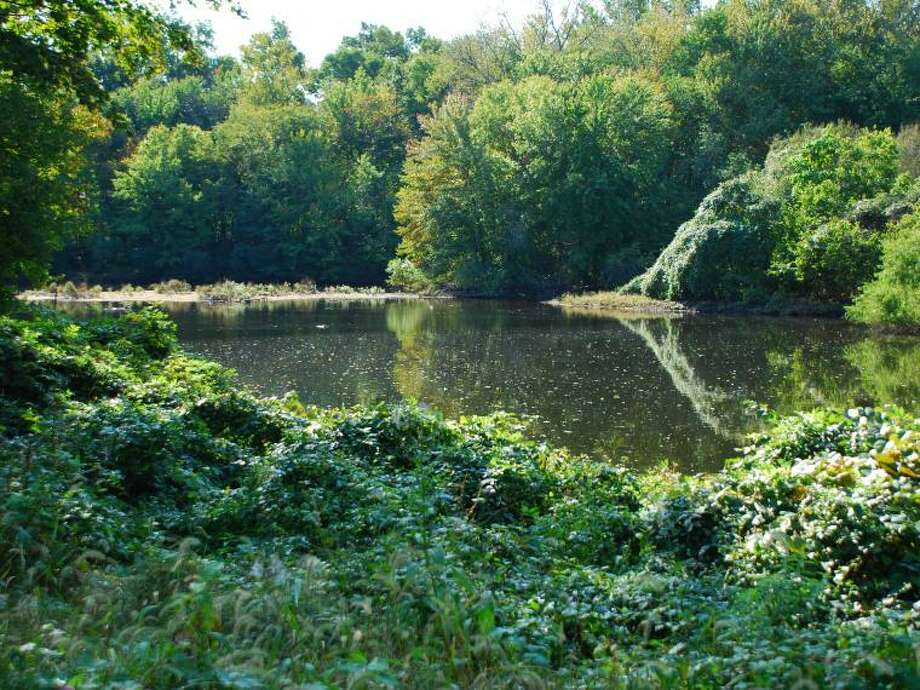Olson Woods is part of Darien Land Trust's preserves available for hiking. Photo: Contributed