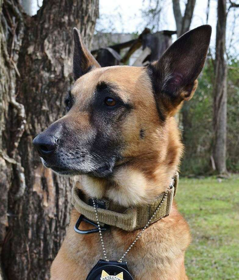 K9 Mike, who served the Fort Bend County Sheriff's Office for eight years, died Sunday at the age of 13. Photo: Courtesy Of The Fort Bend County Sheriff's Office