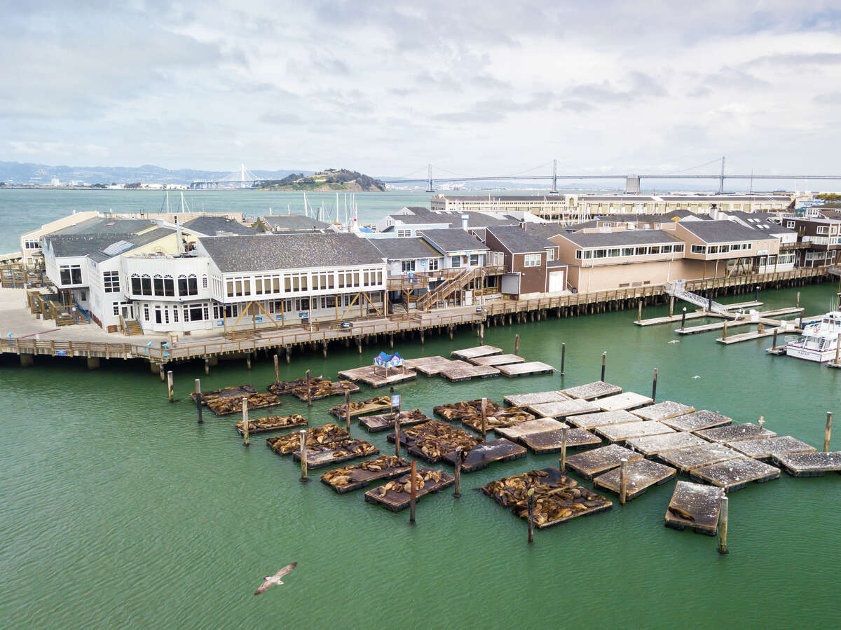 We spoke to Sheila Candor, the harbormaster at Pier 39, to ask how the animals are coping in tourist-free isolation.