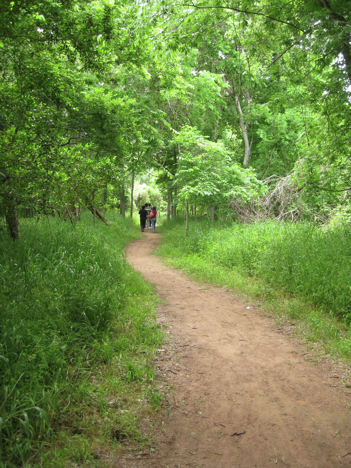 Stephen F. Austin State Park near Sealy is known for its marked paths through the forest.