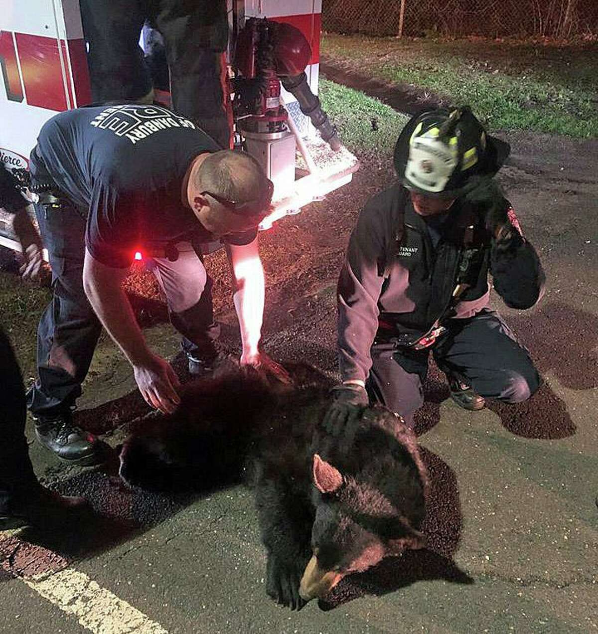 """Mayor Mark Boughton posted a photo of a bear rescue in Danbury on Monday, April 20, 2020. """"What a save tonight by the team at the Danbury Fire Department. Dan Berry was 'barely' hanging on, but, DEEP and our Firefighters managed to save him. Great job!"""" In another tweet, he said the the rescued happened downtown behind the New Street firehouse house"""