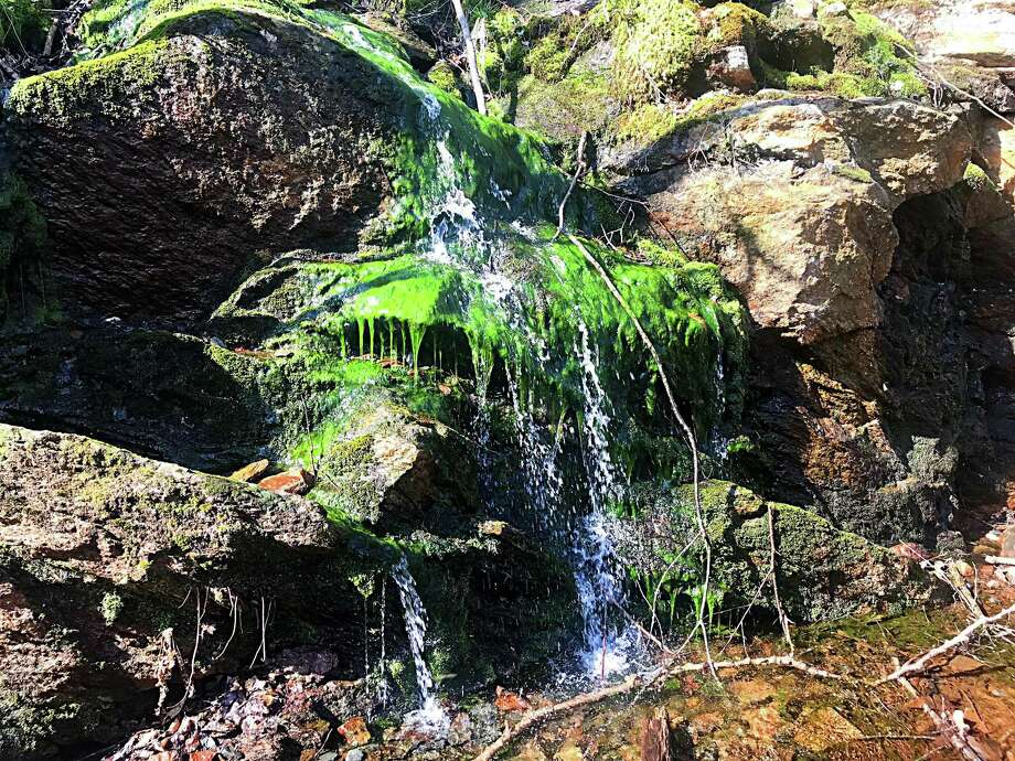 Cool water trickles down the moss and rock face along the Airline Trail in East Hampton. Photo: Hearst Connecticut Media File Photo