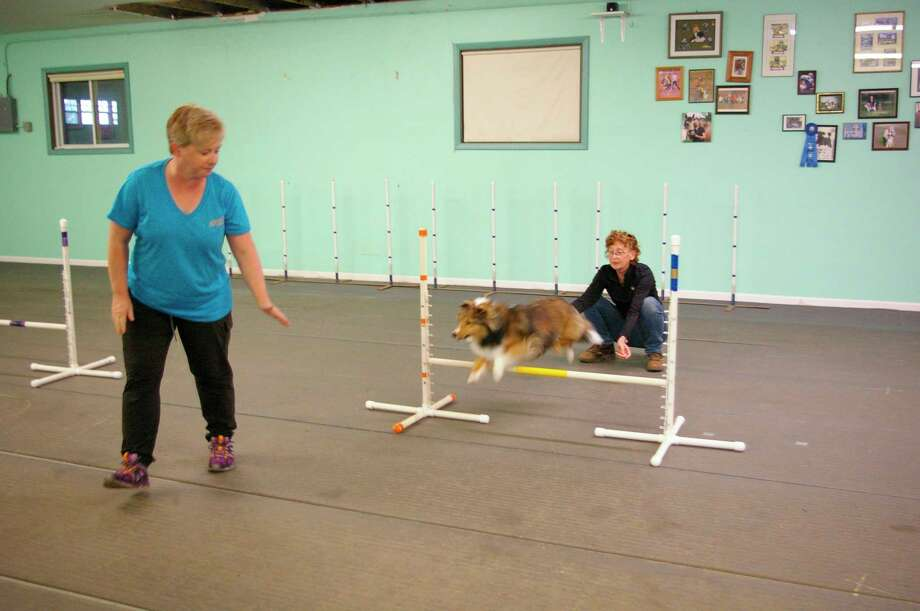 "Kathy Fox of Saginaw and McCallan, a Shetland Sheepdog, are practicing agility at Heaven on Arf training center in the fall of 2019. Brenda Aloff coaches, ""checking her line to the jump."" (Photo by Niky House)"