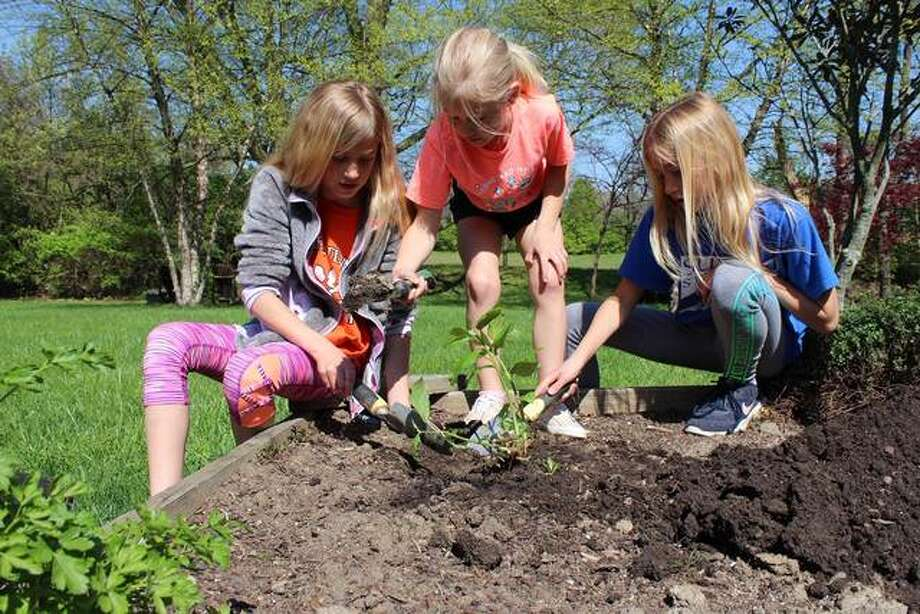 Sisters Ansley Myers, 9, from left; Sabrina Myers, 7; and Ashlyn Myers, 9, of Edwardsville, dig in their backyard flower garden to prepare for planting pollinators.