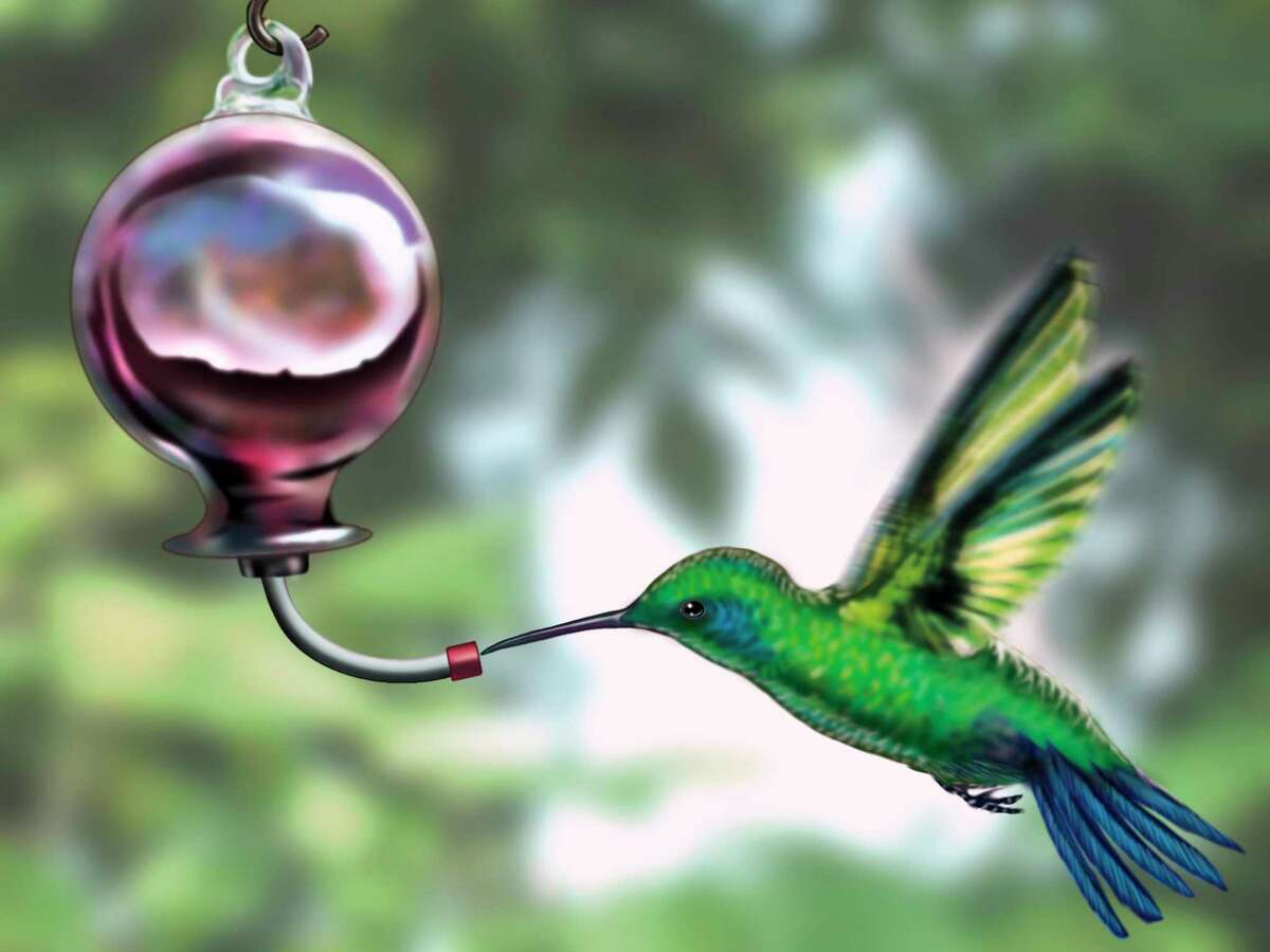Hummingbirds are quick moving and usually start appearing in our area before Mother's Day, which is the perfect occasion to buy bird feeders, food, and brightly colored perennials and annuals for a special mom (visit your local garden centers and bird supply stores online for curbside pickup and delivery options).