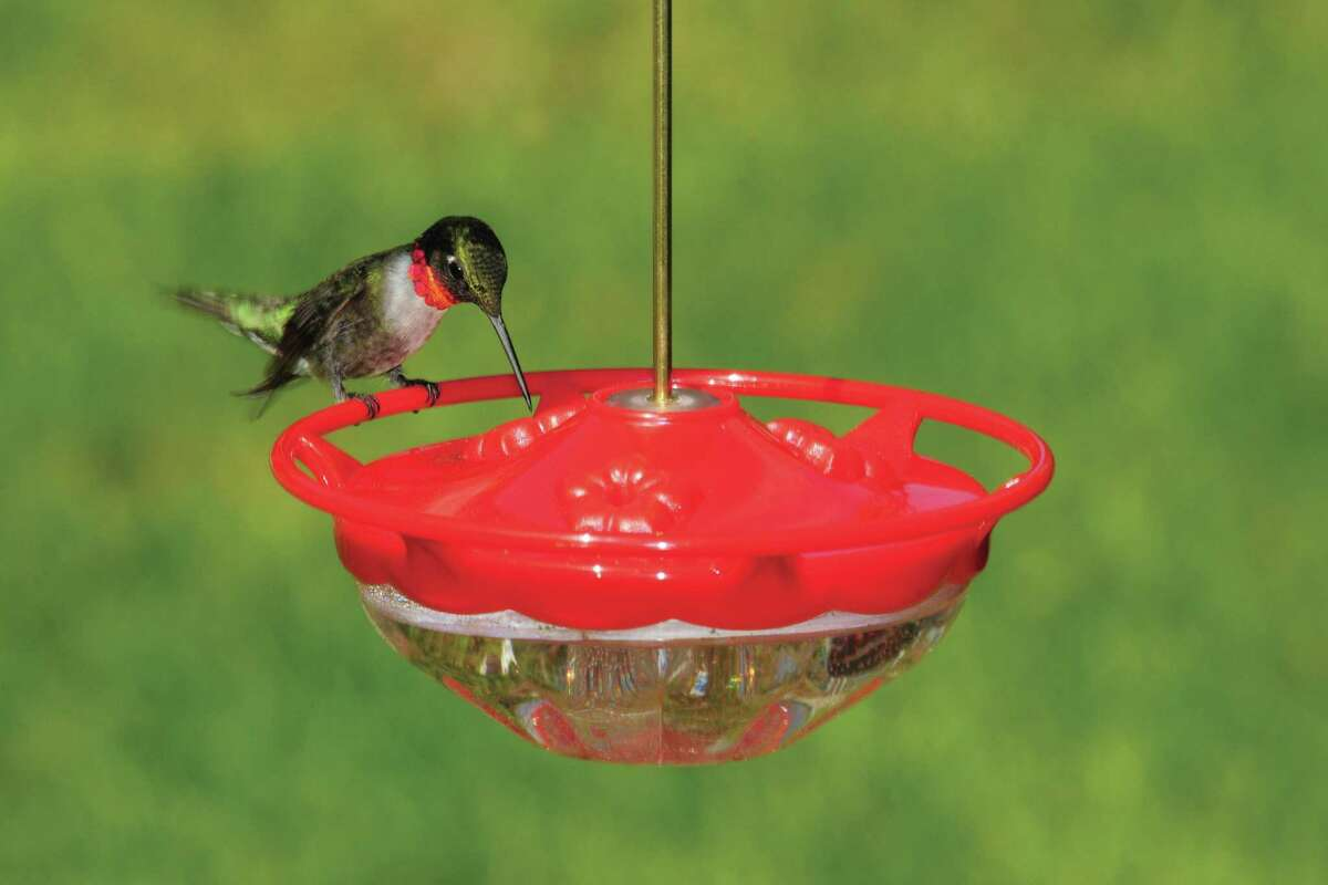 Mother's Day is just around the corner. A hummingbird feeder, like this one (bird not included!) from Wild Birds Unlimited in Darien, would make a wonderful gift for a special mom; and don't forget to include liquid nectar.