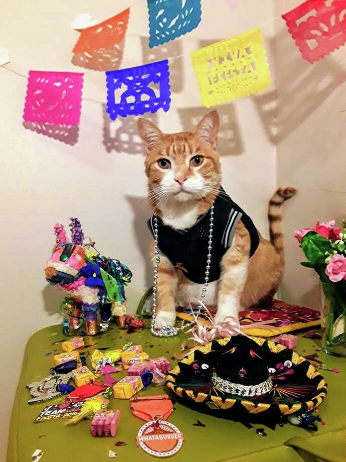 """The San Antonio Humane Society will broadcast a Fiesta-style parade with shelter animals via Facebook Live at approximately 3 p.m. on May 2. Each year, the humane society hosts the """"El Rey Fido"""" coronation, an official Fiesta fundraising event, which joins other pet-centered celebrations on the usual April itinerary. Although all parties and parades are being held off due to the ongoing pandemic, Daniela Vasquez, the society's animal behavior evaluator and trainer, found a way to keep the fun going. Photo: Courtesy, San Antonio Humane Society"""