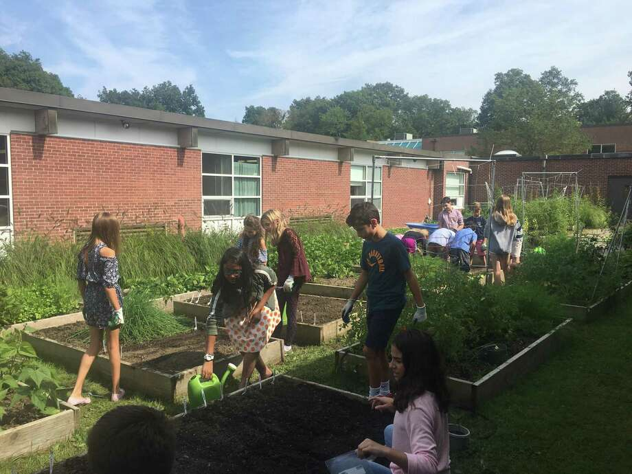 Sixth graders work in the garden at Middlebrook School, which was named a Green Ribbon School by the U.S. Department of Education on April 22. Photo: Contributed Photo / Heather Priest / Wilton Bulletin Contributed