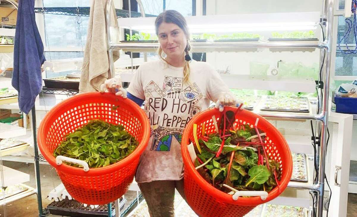 Taylor Matzke holds buckets of salad greens harvested at Millstone Farm on April 20.