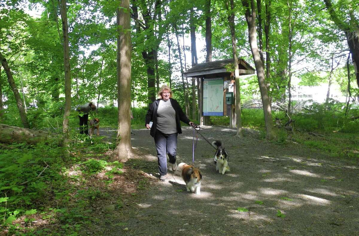 Connie Kamedulski walks her Shelties Boomer, left, and Cooper during the Norwalk River Valley Trail's Mutt Strut last year. This year's event, which is a fundraiser for the trail that will eventually stretch from Norwalk to Danbury, has gone virtual.