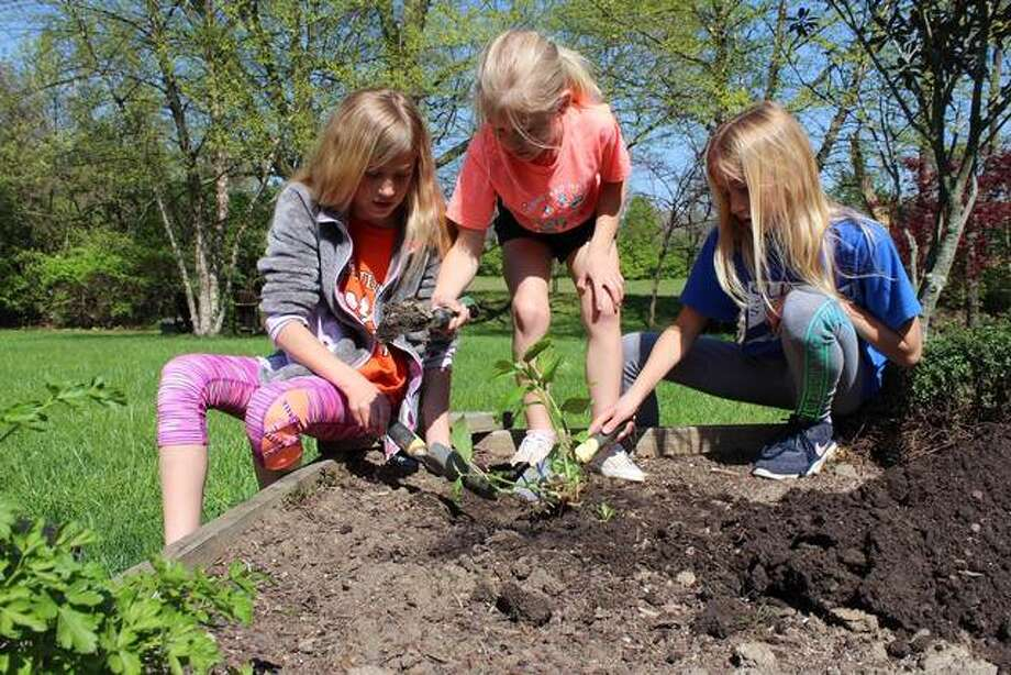 Edwardsville sisters, Ashlyn, 9, Sabrina, 7, and Ansley, 9, Myers, dig in their backyard flower garden to prepare for planting pollinators. Photo: For The Intellignecer