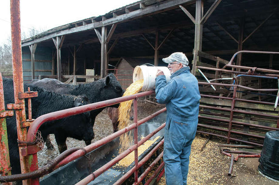 Jenny Sauer Schmidgall's father, Hunter Sauer, feeds his cattle recently. Hunter Sauer has been in farming his entire life and works closely with his daughter. Photo: Darren Iozia | Journal-Courier