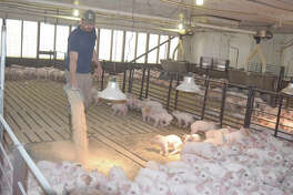 Adam Winkelman feeds a new round of hogs in at his Concord farm.
