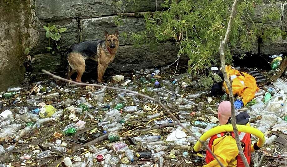 A female German shepherd was rescued Monday morning on April 27, 2020 after it was found a deep water canal along the Naugatuck River. The canal -between 10 to 12 feet deep - was built in the 19th century to supply water for downtown Ansonia factories. Photo: Seymour Fire Department Photo