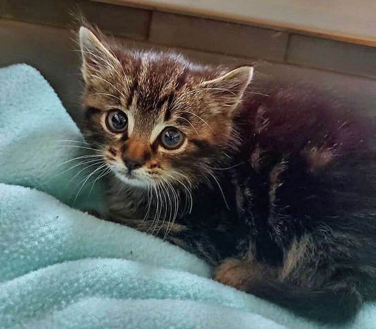 Naugatuck police are looking for the person who abandoned two kittens on Hunters Mountain Road Saturday morning.
